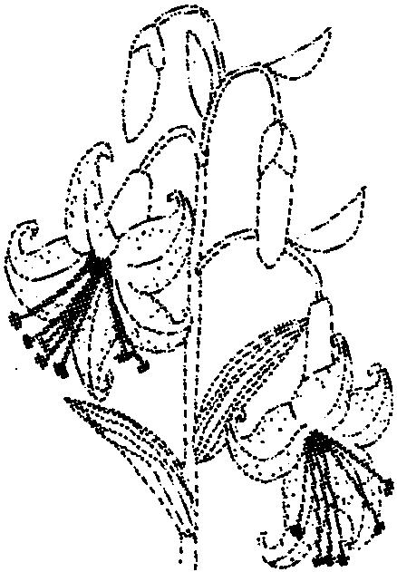 甲壳动物简笔画